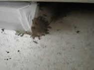 ant control melbourne