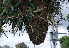 Wasps and Bees Control Melbourne