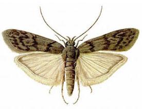 Moth Control Melbourne