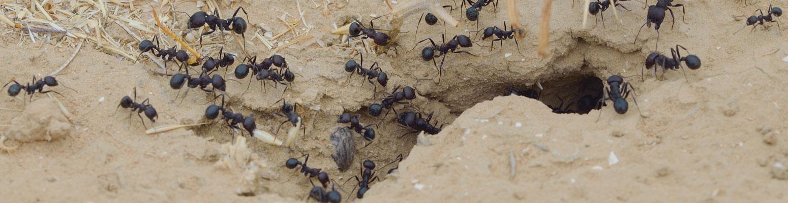antsbanner